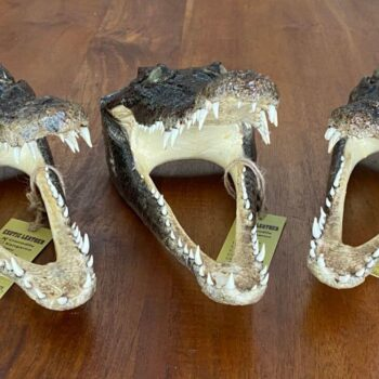 Crocodile skin heads