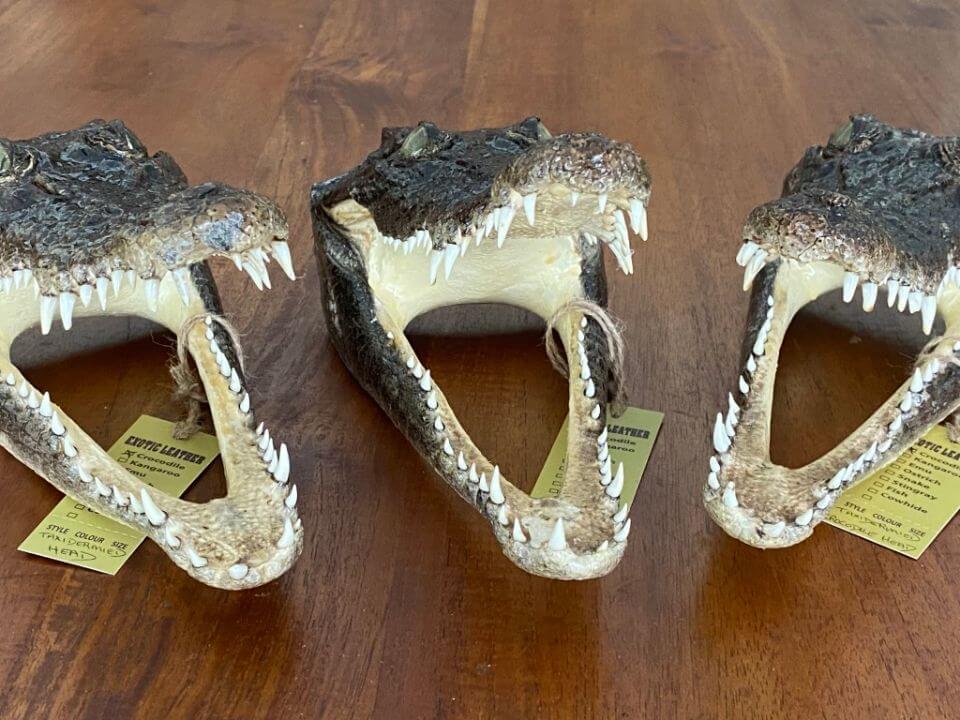 Crocodile skin heads
